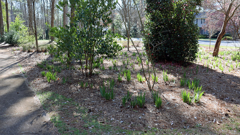 The plant for today was to prepare the yard for the annual mulch project.