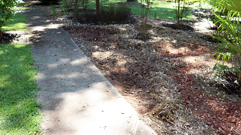 The last location I was thinking about is seen in the photos above and below.  This area was originally nothing but weeds.  But in 2016, I removed the weeds, put down some landscaping fabric, and filled in the area with pine bark chips with the intent of doing something with it later.
