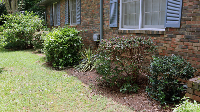 I recently trimmed the hedges in front of the house.