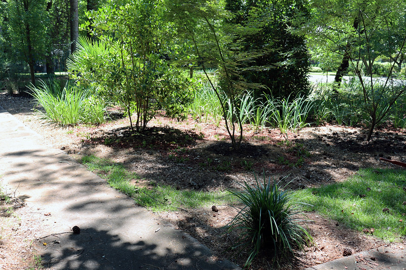 I made my way to the back of the design where I discovered that it was easier to cut all of the irises first before digging and dividing.