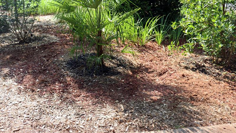 Soon I had created space around the palm tree.