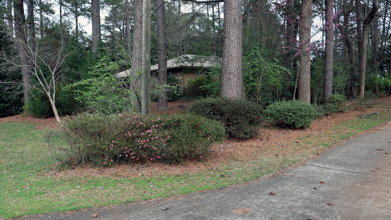 The driveway azaleas are just getting started.