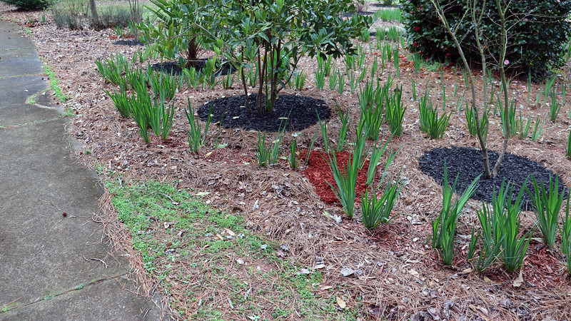 The next phase of the mulch project will be to spread the red mulch.  I bought 35 bags today, and have a feeling that I will need maybe double that amount more to finish the job.  I'll get started on that as soon as the rain takes a break.