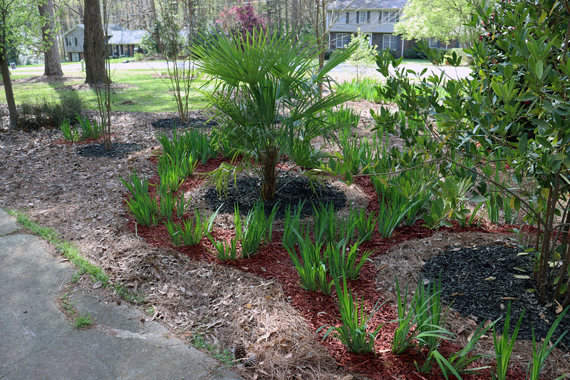 The iris path that surrounds the palm, small anise, and Japanese Maple trees is unchanged from previous years.