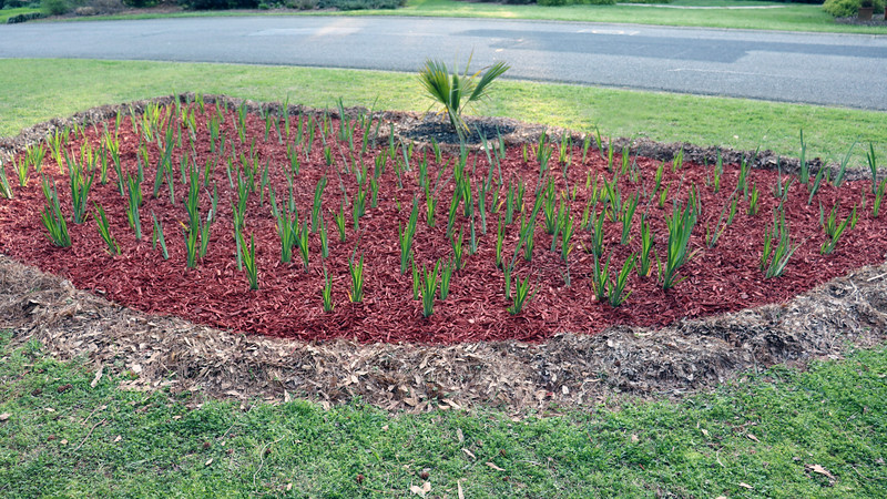I think this will look great once the irises start blooming.