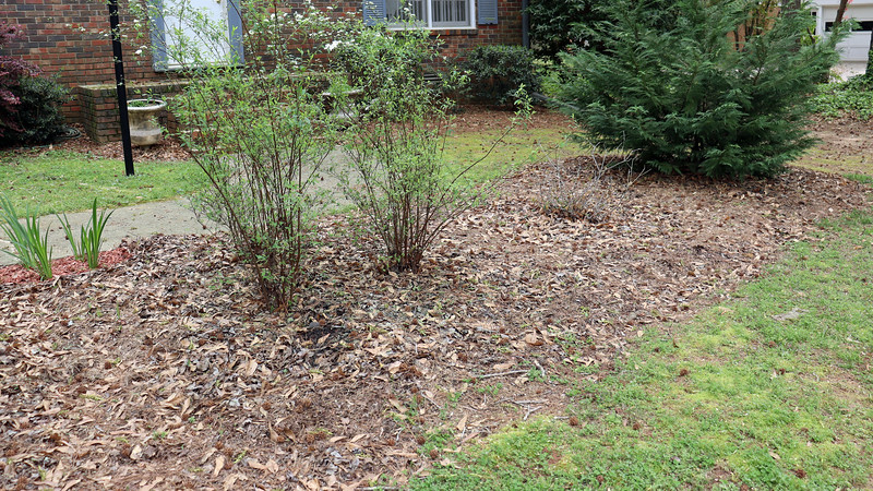 I had thought about using cedar mulch instead of black.  But I think it may blend in too much with the surroundings.