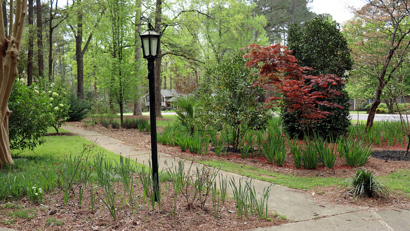 Before finishing the red mulch phase of the project, I took my usual stroll around the yard to see what was happening.