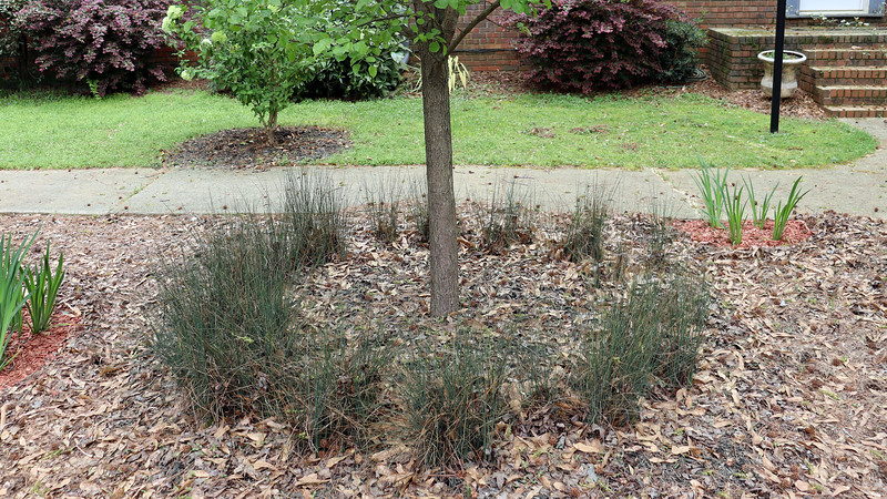 The area around the pear tree will get black mulch.