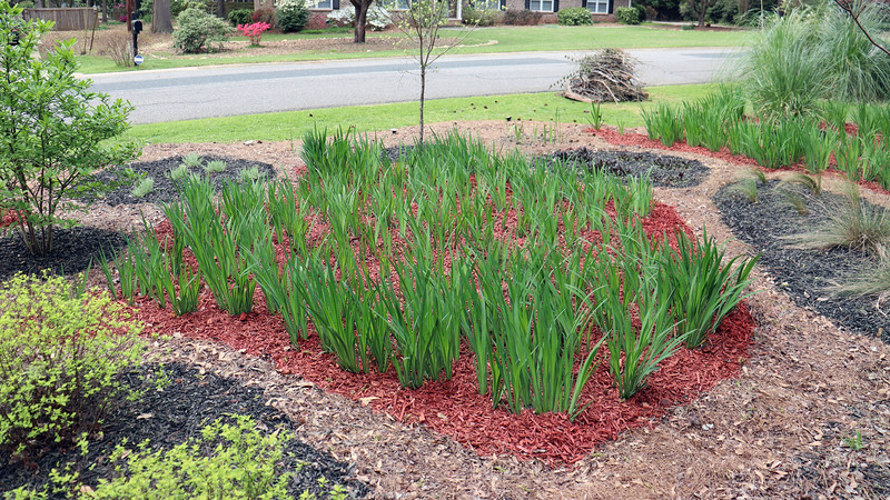 And with that, the red mulch phase of the project was finished.