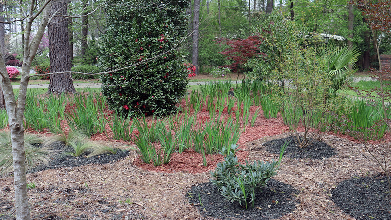Finished the red mulch phase of the project.