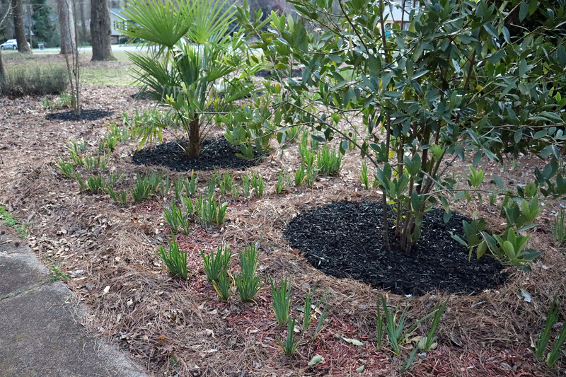 Just like last year, all of the individual plants will get black mulch.