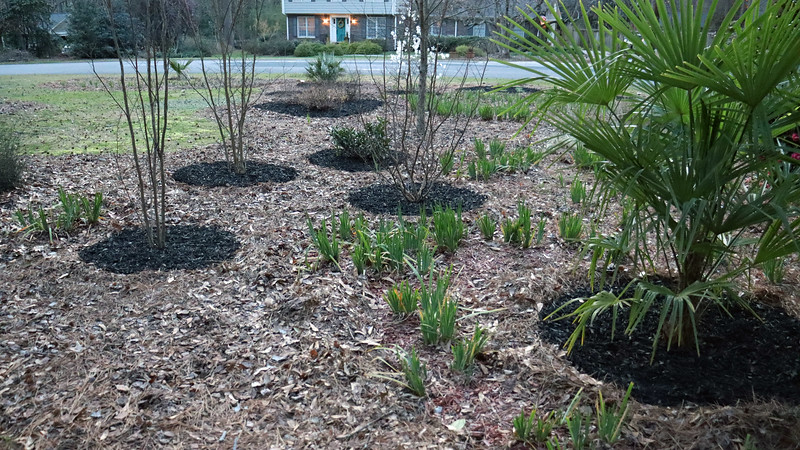 The iris path will get red mulch later.