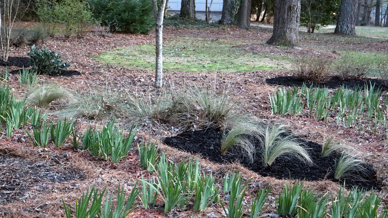 I ran out at the ornamental grasses.  I'll get 5 more bags next week and finish this part of the project.
