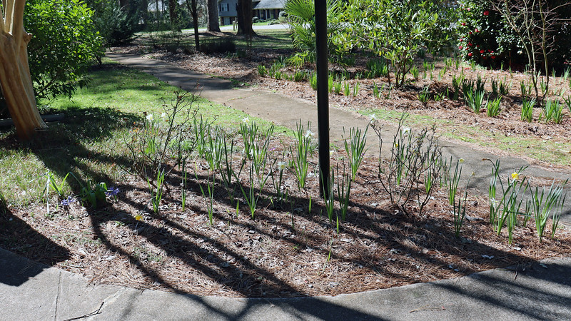 Time to get started with the spring mulch project.  But first, I took my usual walk through the yard.