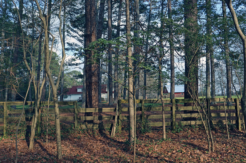 The Buckeye tree in the backyard is awake for the season.