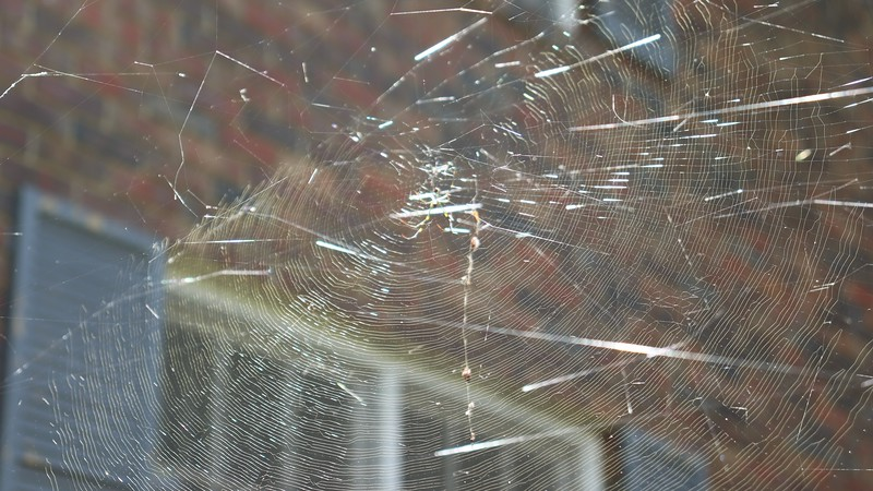 Someone worked long and hard on this web !