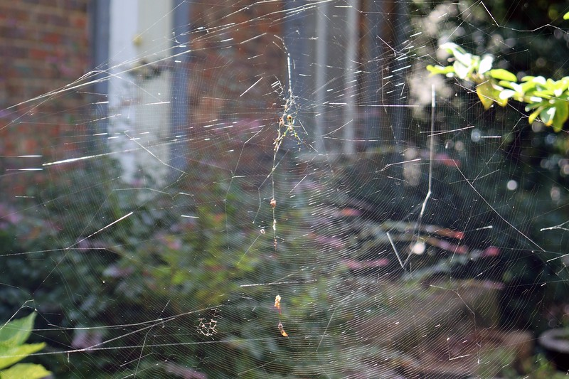 I have these spiders all over my yard.