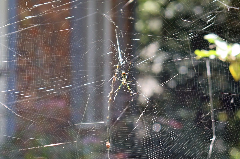 Standing on the driveway side of the web, I was able to get good sunlight reflection off of the web.