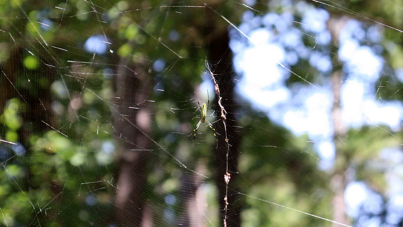 Moving to the other side of the web, the sunlight doesn't reflect as well.