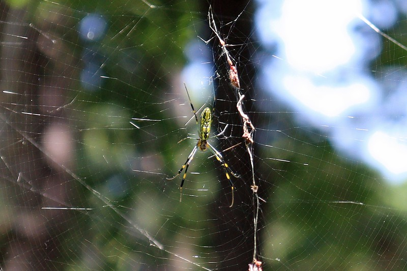 However, I was able to get a great shot of the spider using manual focus.