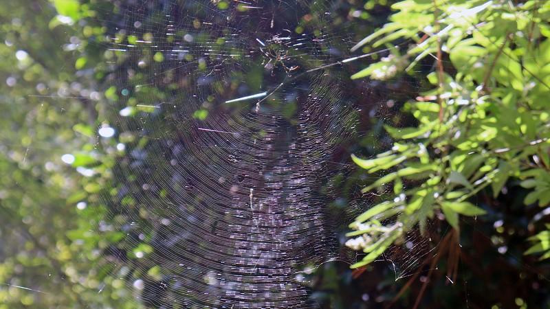 Very impressive web at the Vitex Shoal Creek.
