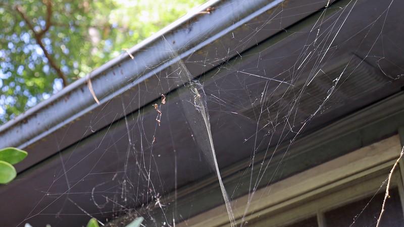 Web next to the garage.
