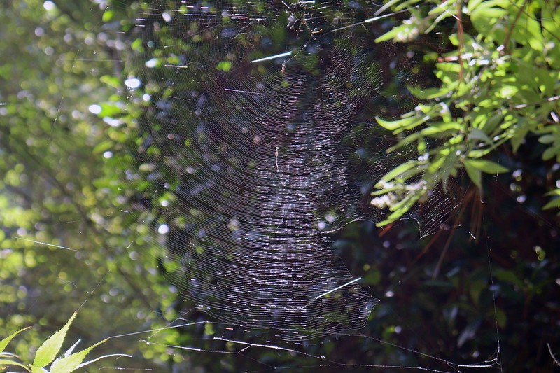 Detail of the web at the Vitex.