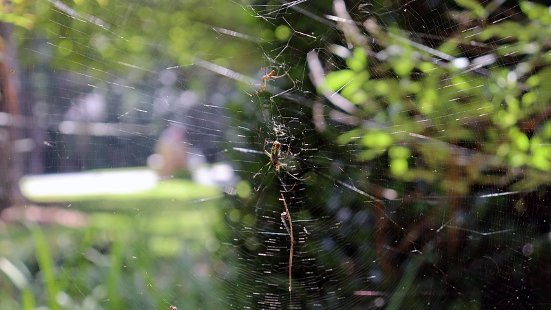 The architect of the web at the Vitex.