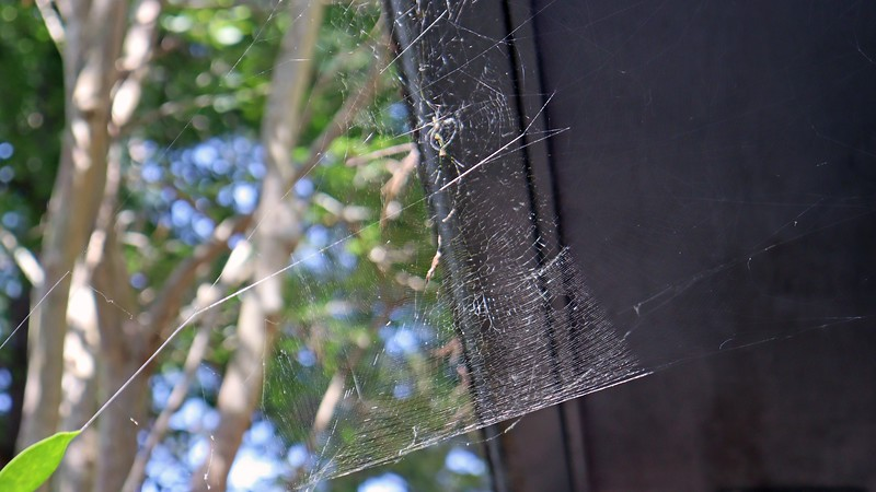I tried to capture some detail of the web, itself.