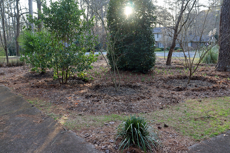 I've got all of the individual plants prepped for mulch.