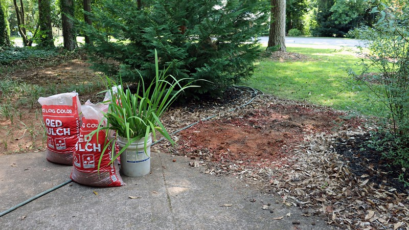 I dug all of the irises out of the ground.