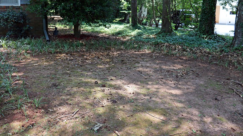 While doing all of this border grass transplanting, I couldn't help but look at the nice circular pattern seen in the photo above and think it would be the perfect spot for the Leyland Cypress in the backyard.