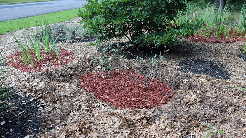 I added some mulch and crossed my fingers.