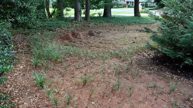 I piled the dirt out of the way for now.  Eventually, I'll spread and level it out, but that can wait.