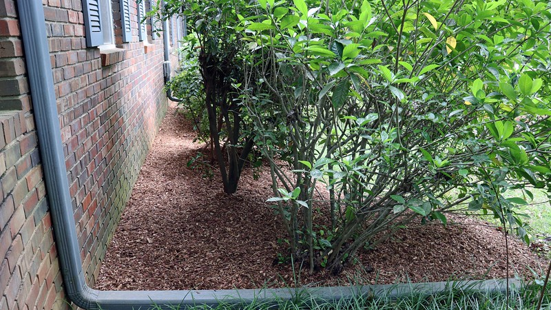 Sixteen bags of mulch later, I had the area in front of the house finished.
