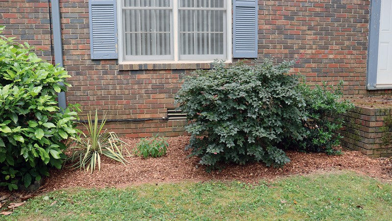 Cedar mulch in front of the house.
