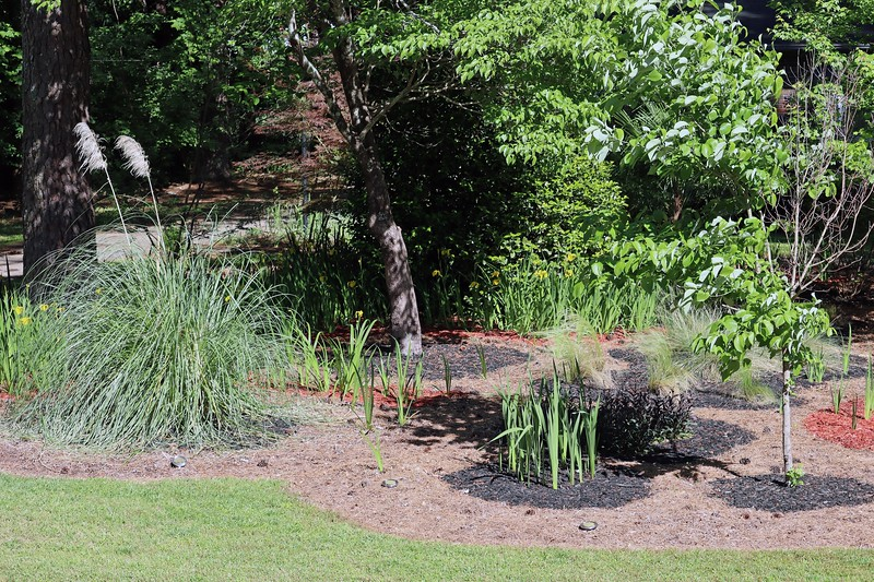Picture 6 of 7 adds the pampas grass, dogwood tree, and some irises.