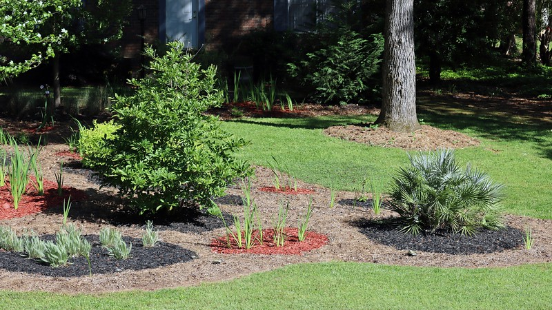 Picture 3 of 7 adds the Star Magnolia and Coronation Gold Yarrows.