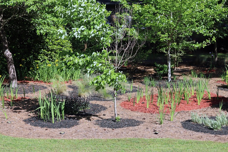 Picture 5 of 7 adds the gladiolus, Husker Red Beardtongues, and all of the ornamental grass plants