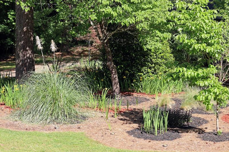 Irises, pampas grass, dogwood tree, gladioli.