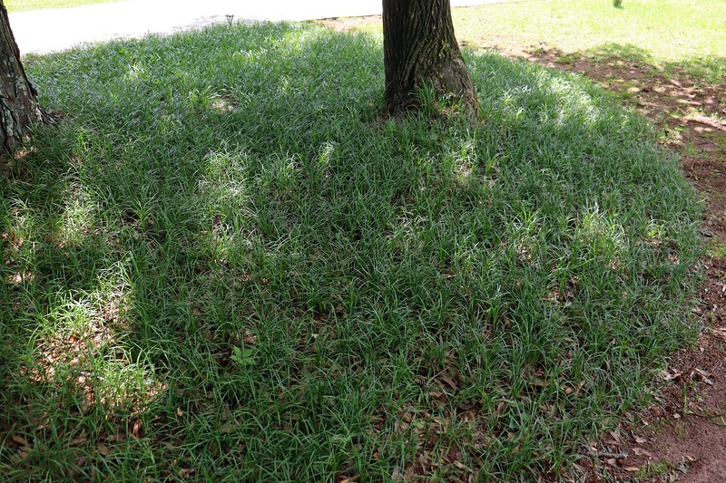"""Since I was pulling weeds, I headed over to the other side of the yard to try and pull whatever I could see that was growing among all of the border grass.  I say """"try,"""" because there were a lot more weeds over here than I anticipated.  This is something I'll have to pay more attention to in the future."""