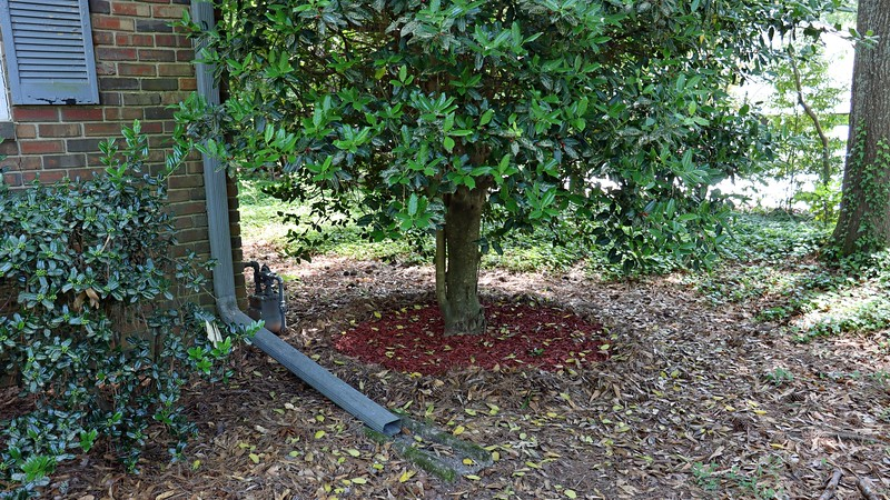 The newly cleaned out and mulched area at the Holly tree looks good.