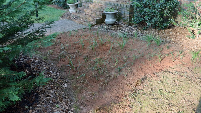 I've got enough of this grass growing around the yard to fill in this entire area.