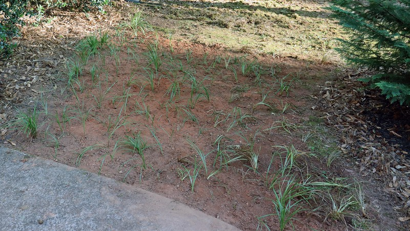 I kept digging up border grass from around the yard and transplanting it to this area.