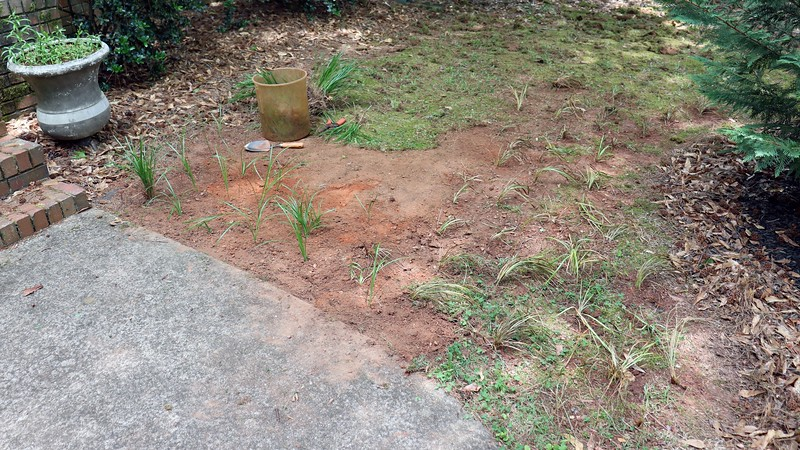 """The area next to my front walk seen in the photos above and below has been covered with moss ever since I moved in.  I don't remember ever seeing grass in that spot.  I've never liked the look of the moss, but kept it in place because it has been a low-maintenance way to keep the dirt in place and looking """"green"""" from a distance.<br /> <br /> During this weeding project, it occurred to me that I've been digging up a lot of good looking, hardy grass that will grow just about anywhere.  So why not put it here ?"""