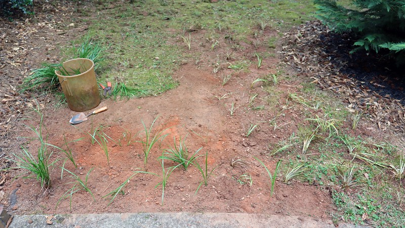 I started taking the grass I was digging up, dividing it, and planting it in this spot.