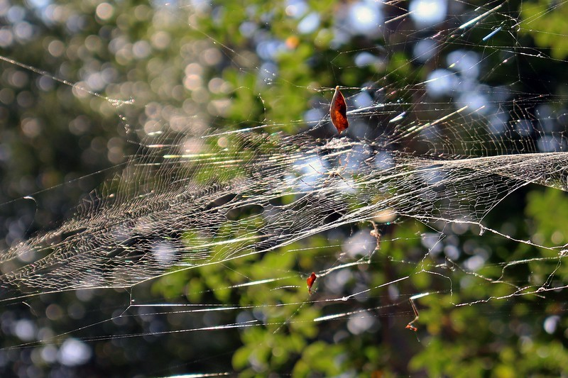 Upper web at the crape myrtle by the garage.