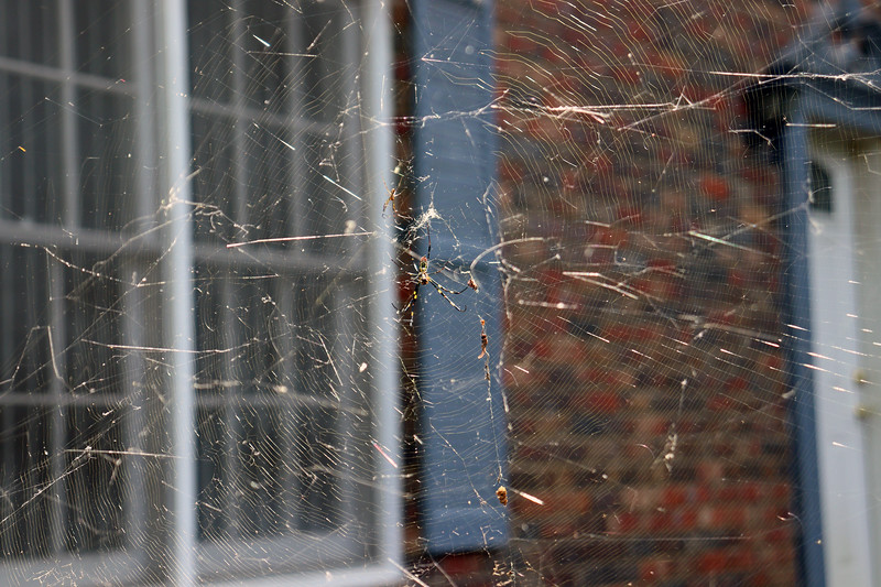 This web is a bit flustered.  But its circular shape is still intact.