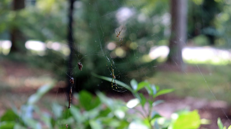 This was the first web I noticed when the invasion began.