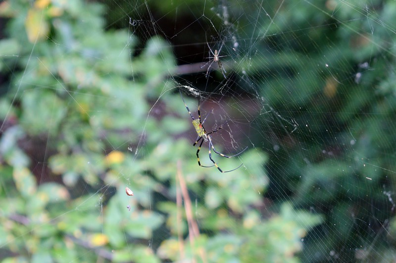 The third web at the first azalea cluster.